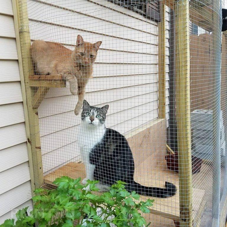 Вольеры для кошек своими руками. изготавливаем для кошки вольер своими руками. деревья и лестницы для лазания
