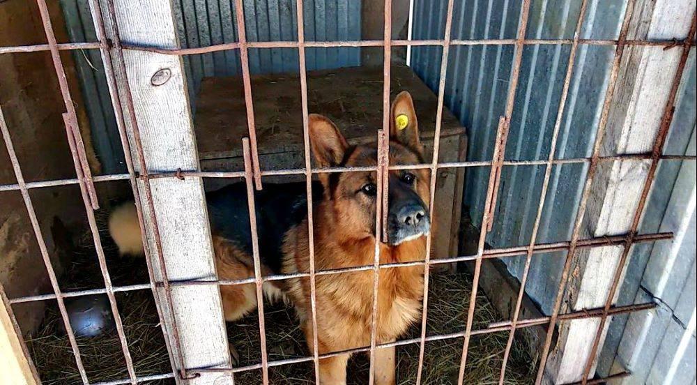 Лают собаки во дворе, куда жаловаться и как от них избавиться?