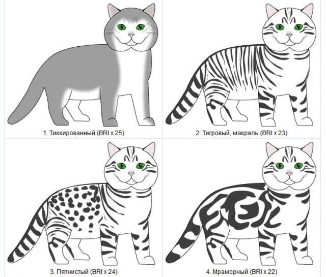 Загадочные чёрные кошки: всё об их окрасе