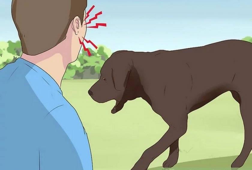 Кашель у собаки как будто подавилась, возможные причины, лечение и способы оказания экстренной помощи