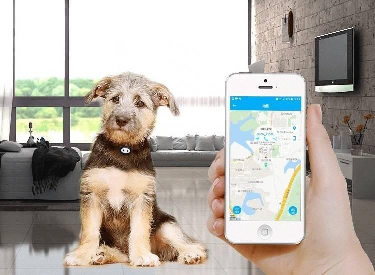Что такое собачий gps-трекер и для чего он нужен: обзор лучших навигаторов