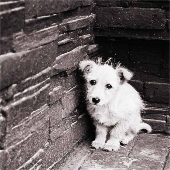 Как долго собаки помнят обиду: стресс или обида, собачья память