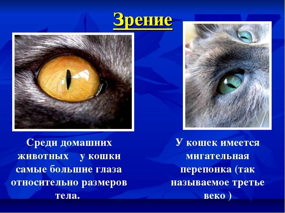 Примеры как видят коты: наш мир, человека, в каких цветах и различают ли они их