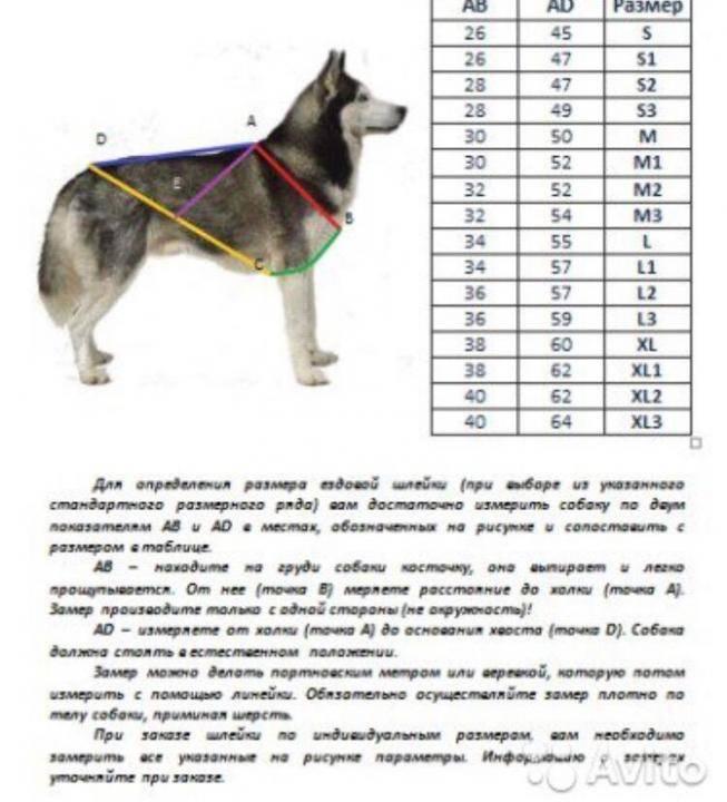 Для чего нужна и как правильно выбрать шлейку для собак