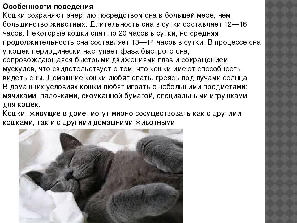 5 пород собак с «кошачьим» характером - gafki.ru