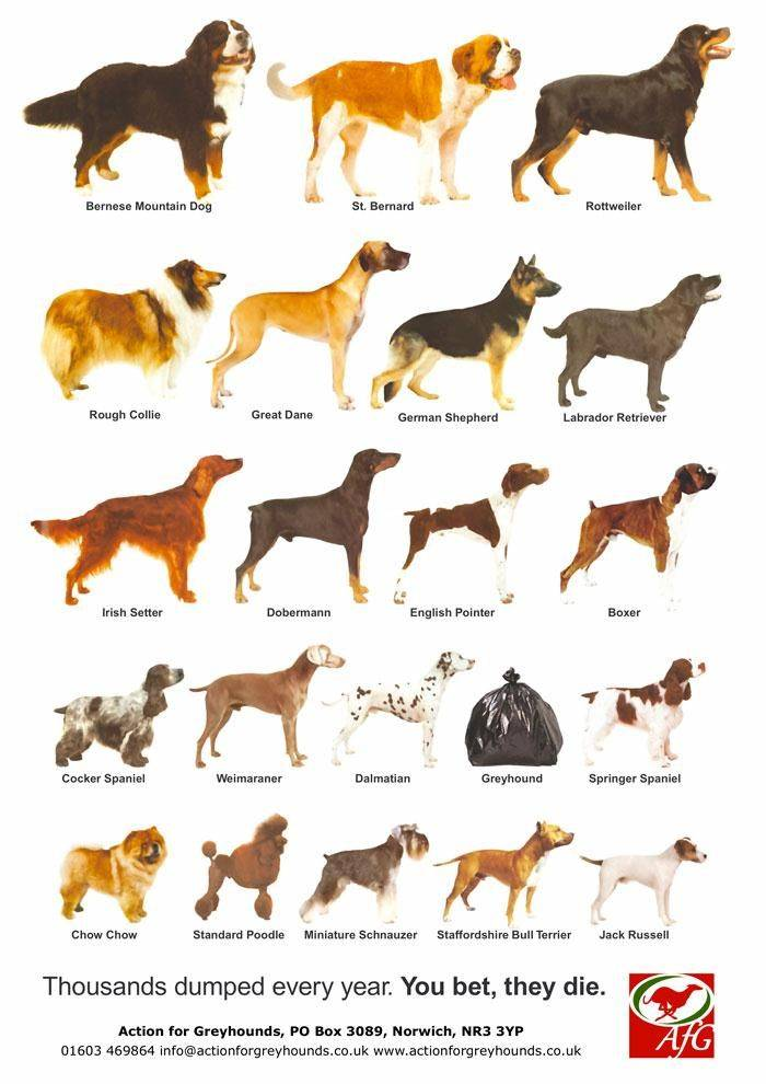 Самая древняя порода собак в мире | на земле, как называется