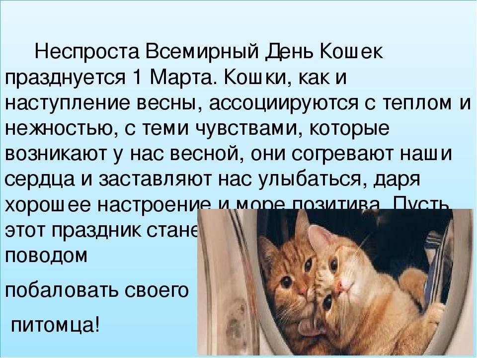 1 марта - международный день кошек: история появления