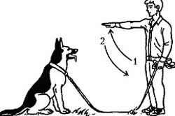 Перечень базовых и интересных команд для собак: как обучить питомца