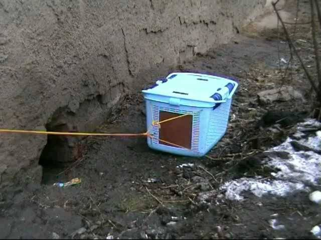 Как поймать кошку дикую или домашнюю на улице: способы и средства привлечения животного
