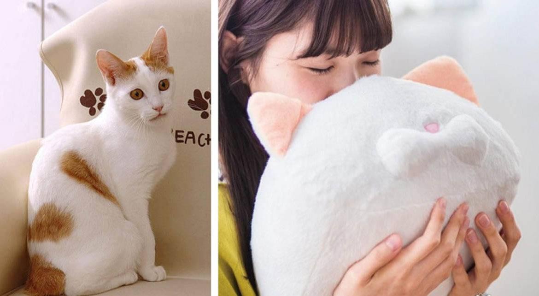 """Почему воняет кот? причины и способы устранить проблему — журнал """"рутвет"""""""