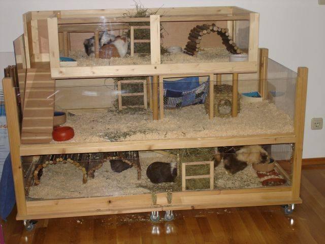 Игрушки и аксессуары для морских свинок