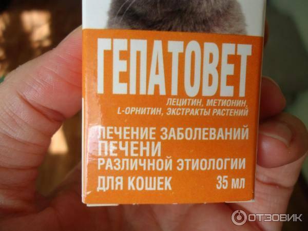 """""""гепатовет"""" для собак: инструкция по применению"""