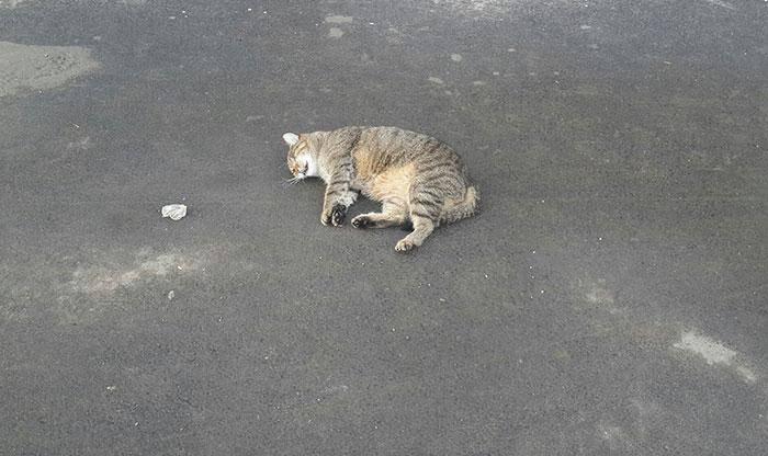 Кошка или кот упал с 5, 6, 7, 8, 9 этажа, что делать? | сайт о домашних животных
