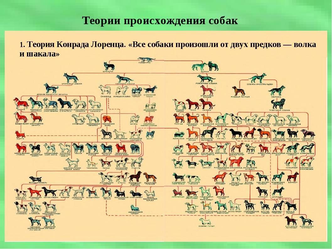 Сколько пород собак существует в мире?