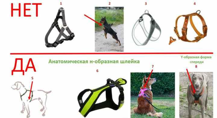 Шлейка для собак своими руками: как быстро, просто и бюджетно сшить питомцу прогулочную шлейку