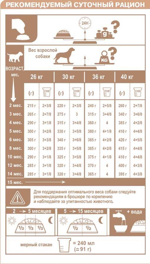 Чем можно кормить лабрадора: выбор между натуральными и промышленными кормами