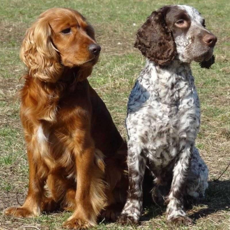 Подробно о продолжительности жизни мопсов дома: влияющие факторы на собак