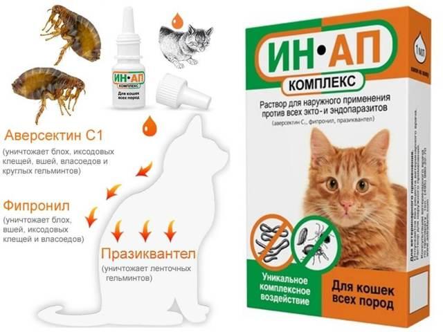 Капли для кошек от клещей и блох: требования к каплям, список лучших препаратов, побочные эффекты
