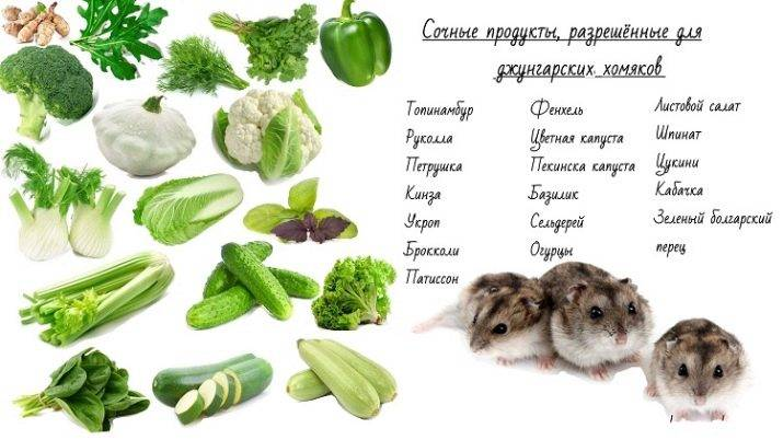 Что можно пить хомякам. чем кормить хомяка: лучшие советы. список полезных овощей