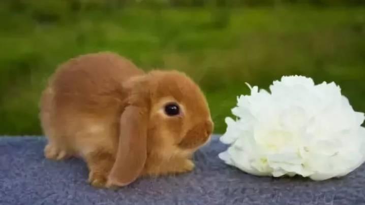 Подходящие имена для декоративного кролика