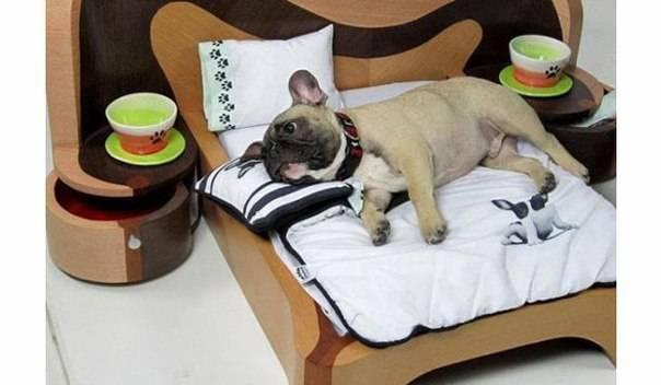 Можно ли спать с собакой в одной постели