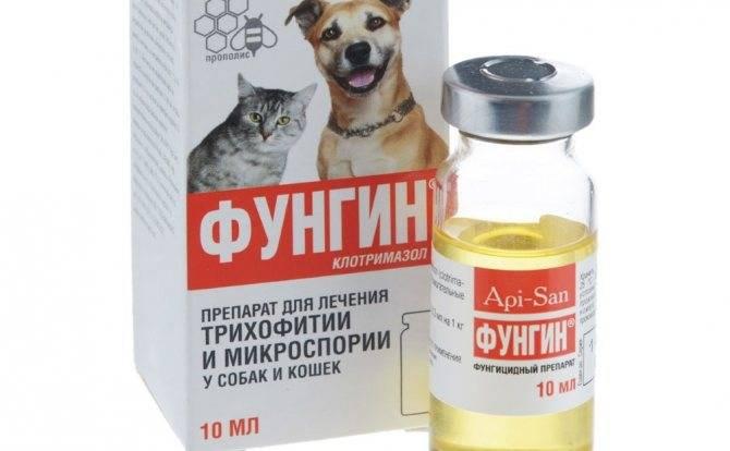 Лишай у кошек: как выглядит и чем лечить в домашних условиях