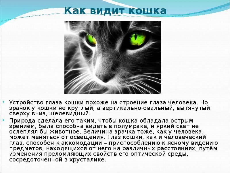 Как кошки видят: особенности восприятия окружающего мира днём и ночью, отличия кошачьего глаза от человеческого