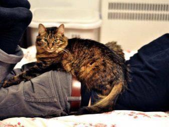 Что болит у кота если он лежит на спине