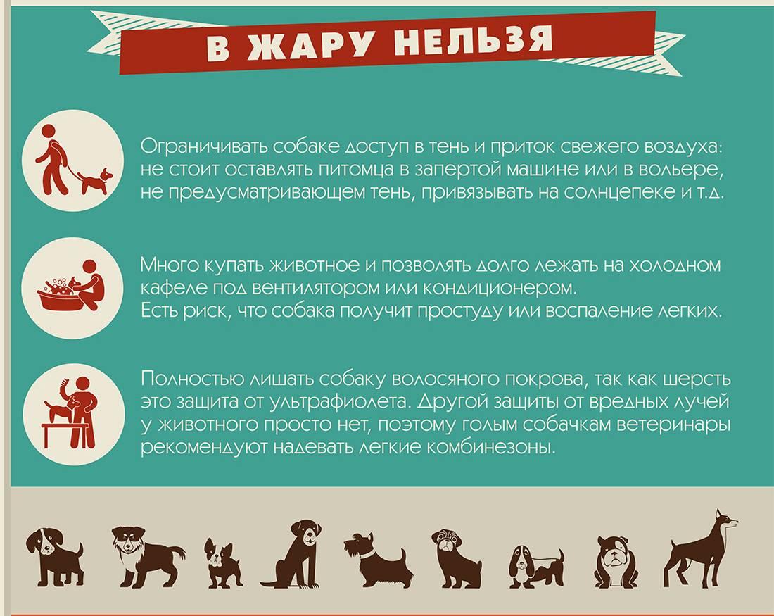 Как помочь собаке в жару - в квартире и на улице