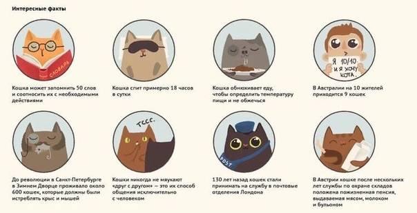 Понимают ли коты человеческую речь и как у них это получается