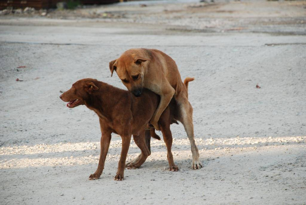 Почему собака ездит на попе: полный перечень причин