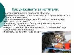 Чем кормить кошку в домашних условиях натуральной едой: меню