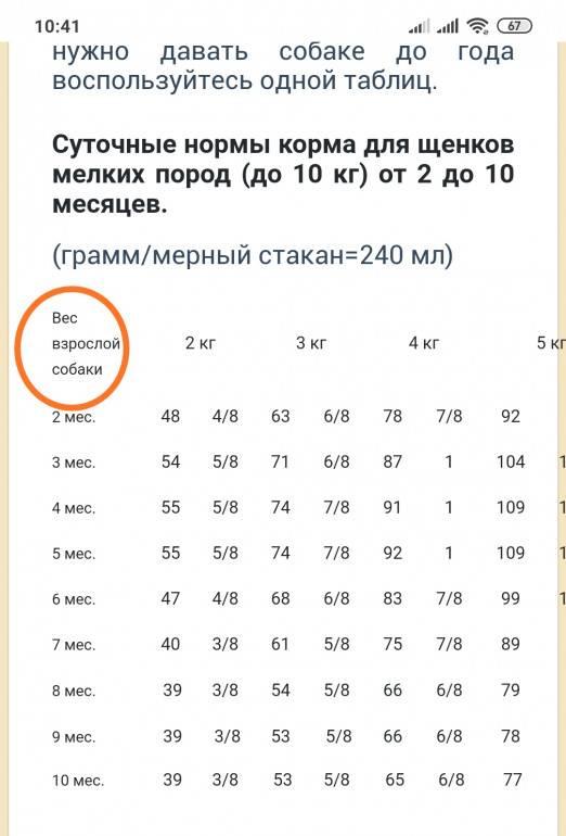 Сколько весит взрослый лабрадор и щенок: до какого возраста растут