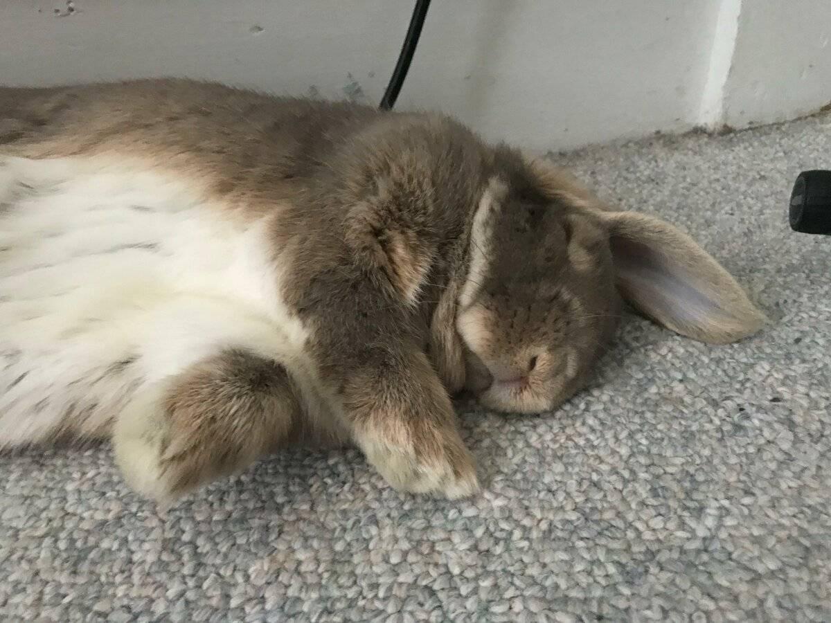 Почему дохнут кролики один за другим: что делать