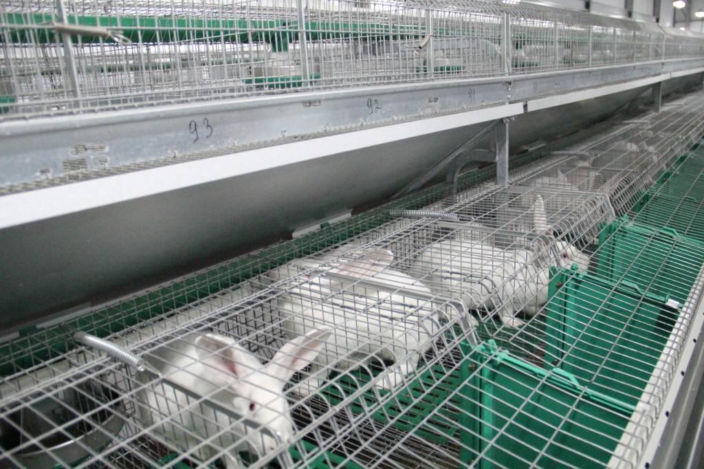 Кролиководство для начинающих: как сделать выгодный бизнес