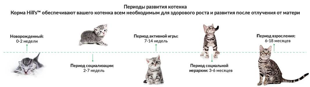 Ранняя смертность котят (синдром угасающего котенка)