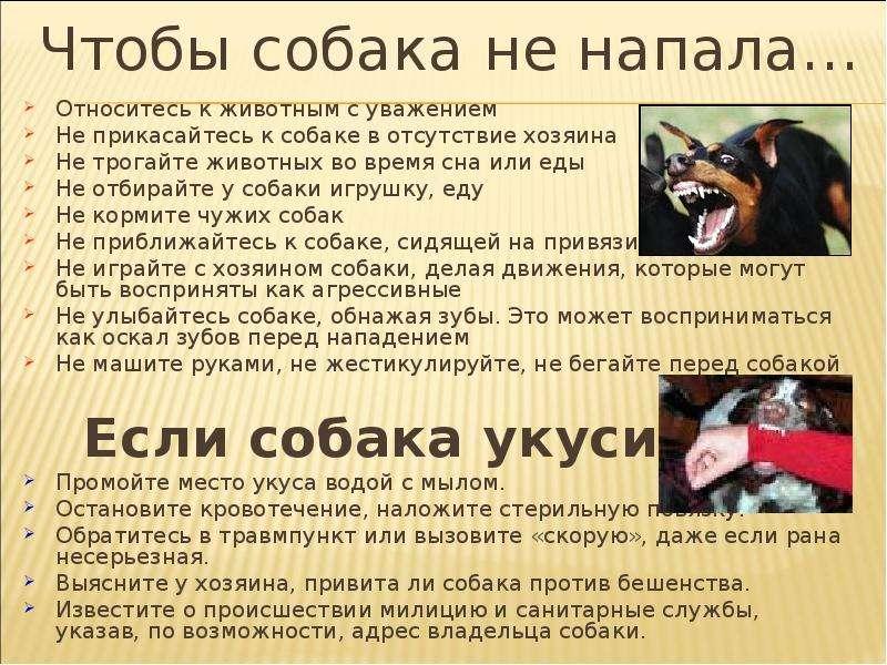Если укусила собака: что делать по закону