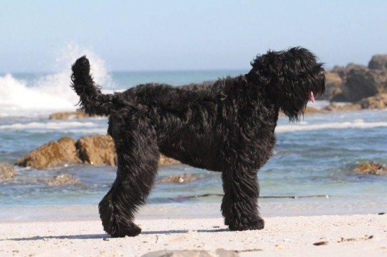Служебные породы собак с фотографиями и названиями | petguru