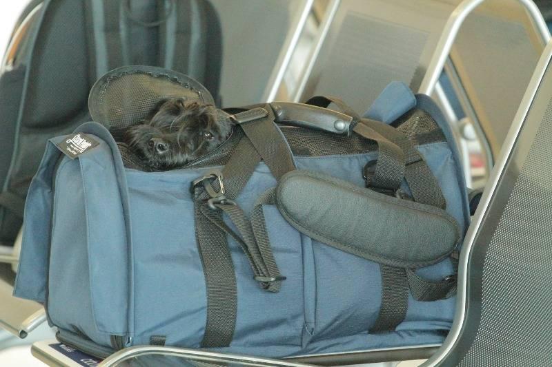 Как правильно перевезти кошку в автомобиле на дальнее расстояние без переноски