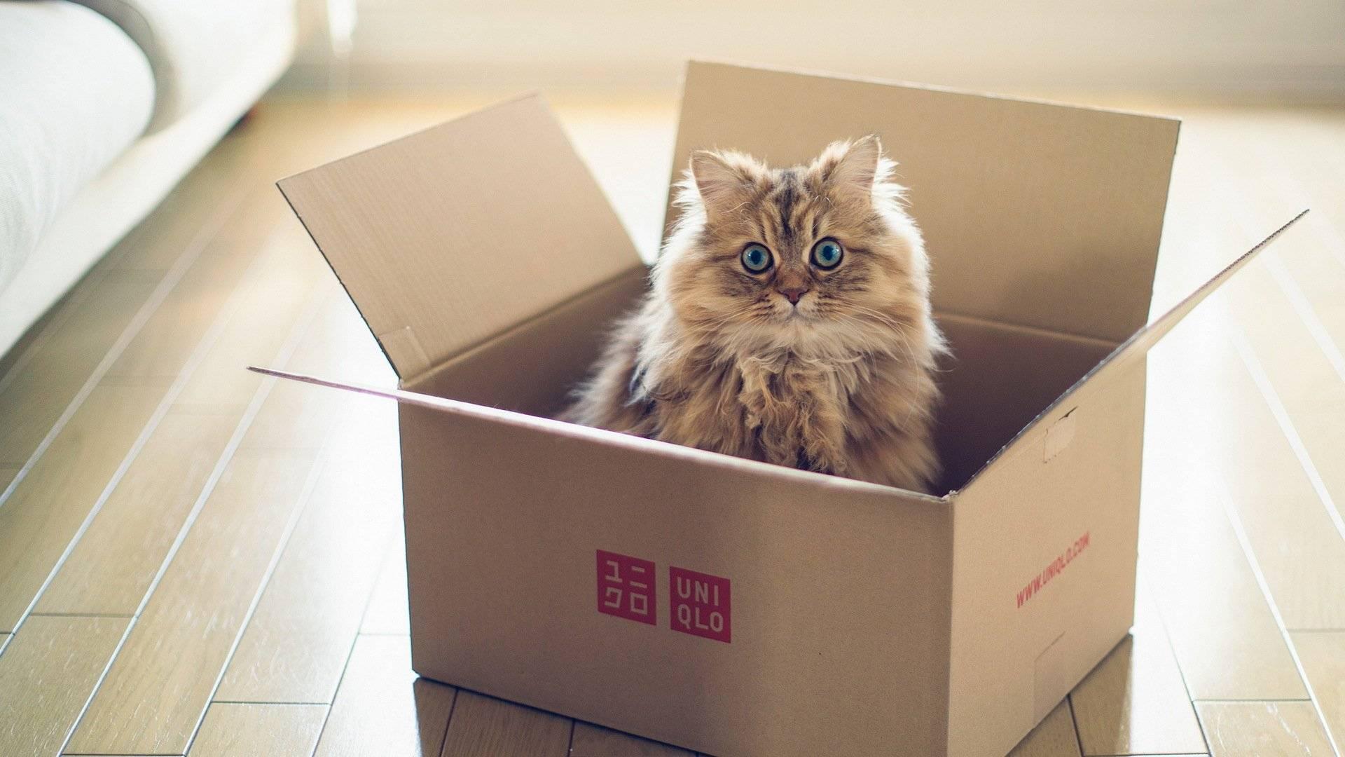 Тайна века: почему кошки так любят коробки?