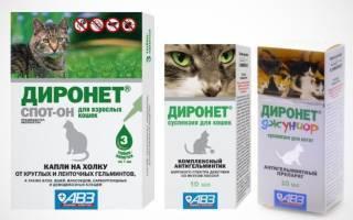 Основные особенности капель «дана спот-он» для кошек