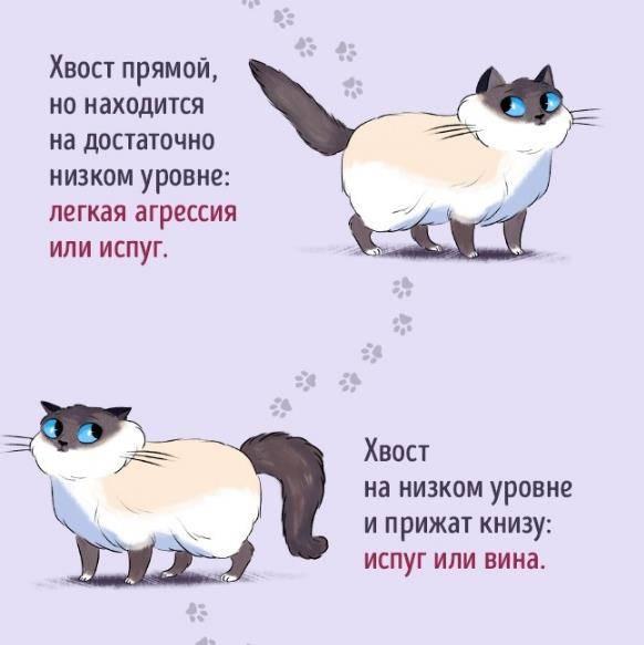 Почему кошка дергает хвостом – 5 основных причин движения
