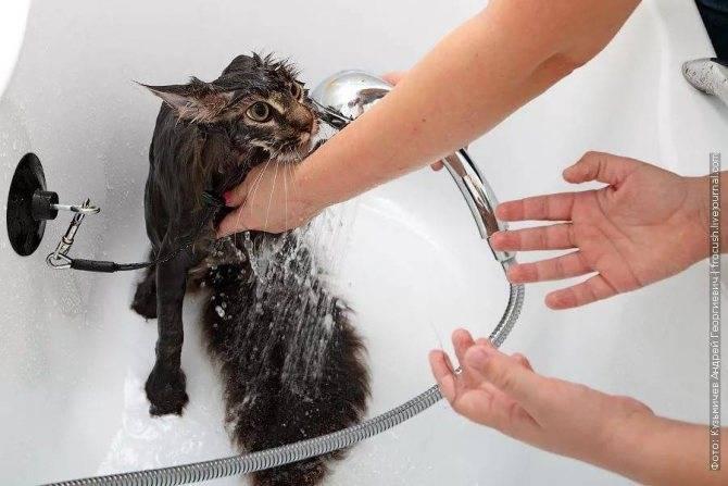 Помогает ли дегтярное мыло в борьбе с блохами