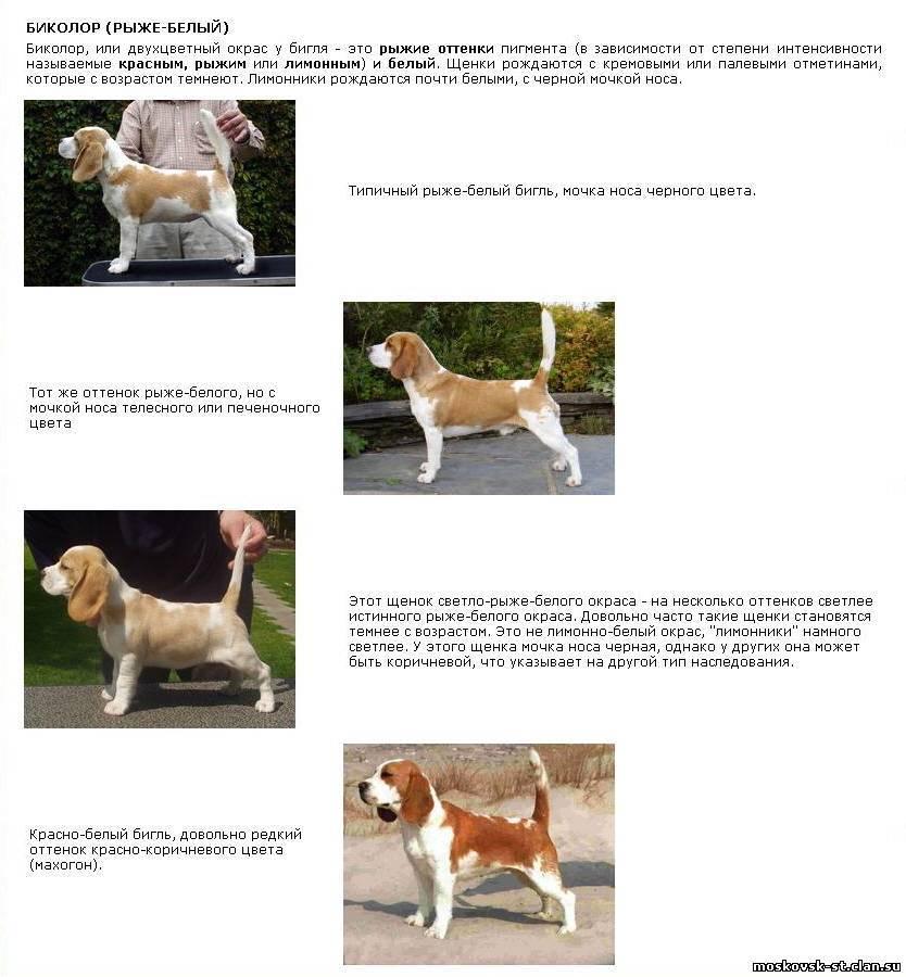 Белые собаки