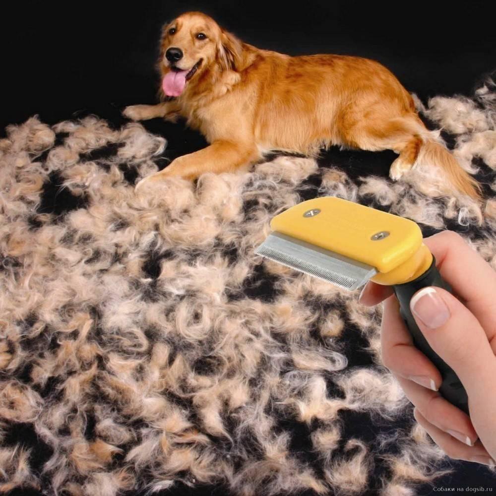 Линька у собак: в какие периоды и сколько длится