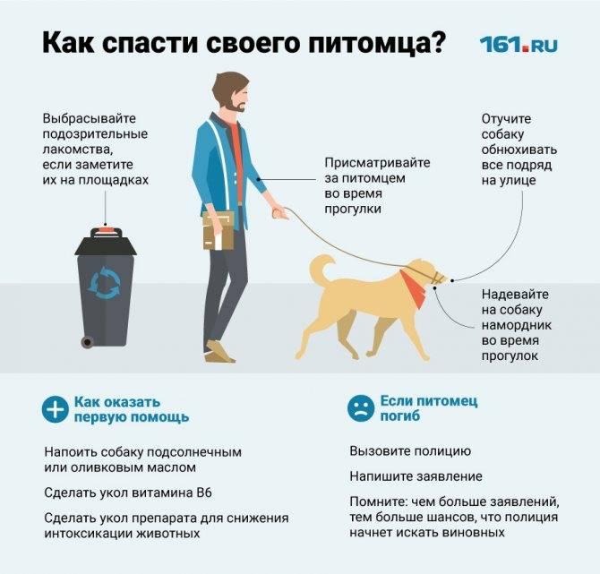 Отравление у собак: причины, особенности, профилактика, признаки, лечение, виды, симптомы
