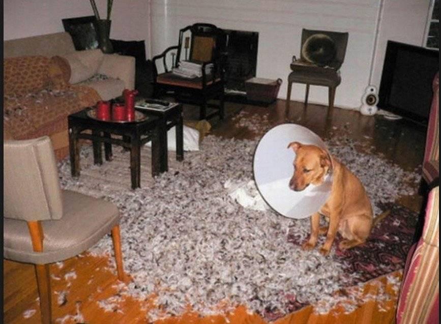 Почему собака скулит?