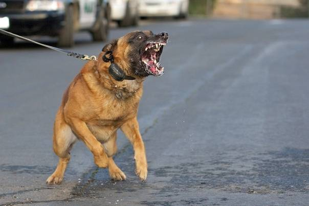 Наказание за выгул собак без намордника
