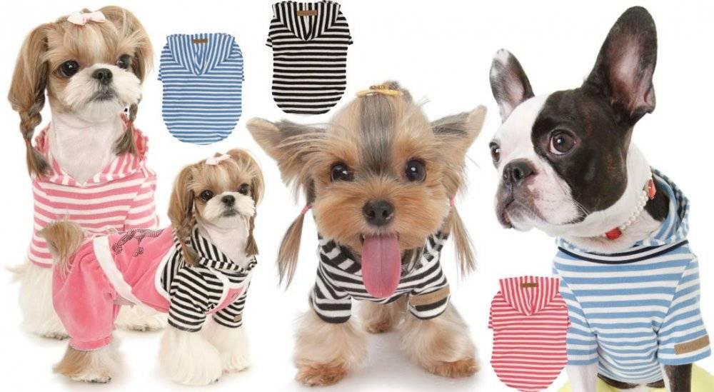 Топ-36 лучших собак для квартиры | dogkind.ru