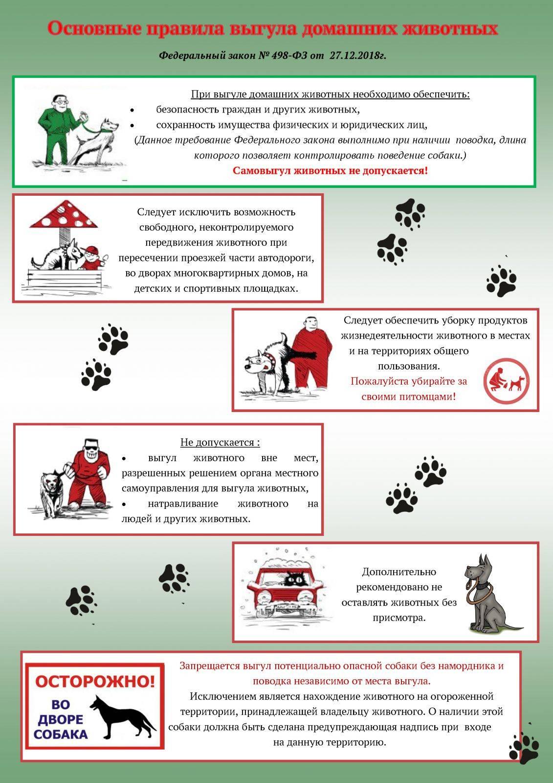 Новые правила содержания домашних животных в 2020 г.